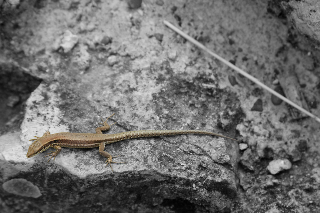 20-Gekko-Color-Key.jpg